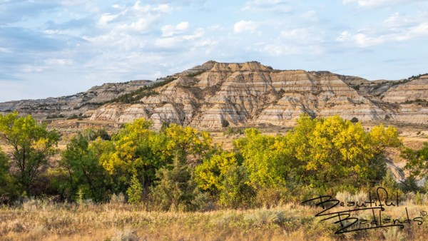 North Unit, Theodore Roosevelt National Park, fall colors, colored trees, gold leaves, striped buttes, North Dakota, badlands