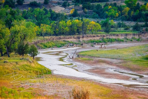 The Little Missouri River runs low early September as the green trees begin to turn yellow and gold