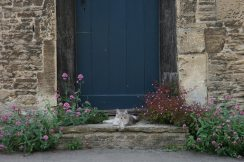 Cat on doorstep, Lacock