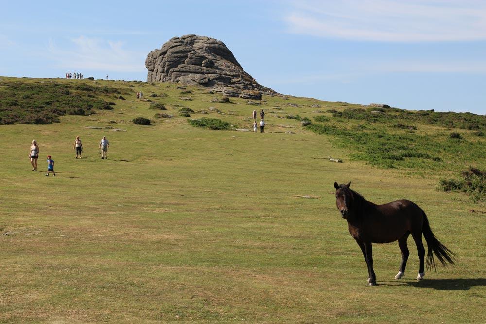 Dartmoor pony, path to Haytor, Dartmoor
