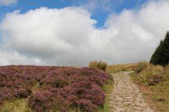 Heather, beside path to Pen y Fan, Brecon Beacons