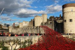 Cascade of poppies, Western Outer Wall, Tower of London