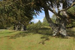 Path along King Barrows, Stonehenge Down, Stonehenge