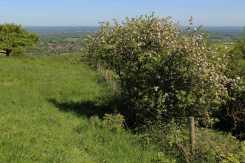 Ditchling Down, Ditchling Beacon