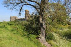 Meadow, Pevensey Castle, Pevensey