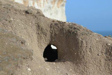 Rabbit hole, cliff edge, Beachy Head