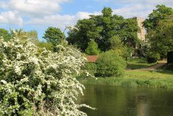St. Mary's Church and River Great Ouse, Felmersham