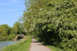 May blossom on towpath, Kennet and Avon Canal, Devizes