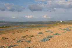 Salt marshes, Hurst Spit, Milford-on-Sea