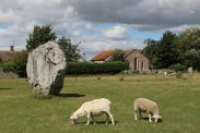 Sheep grazing, South East Sector, Avebury Henge