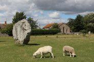 Sheep grazing, South East Sector, Avebury Henge