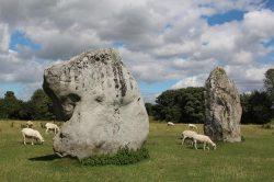 Stones, South East Sector, Avebury Henge