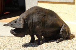 Bronze pig, The Pig on the Beach Hotel, near Middle Beach, Studland