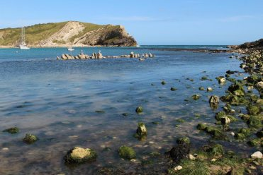 Oyster beds, Lulworth Cove