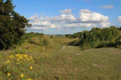 Danebury Hill