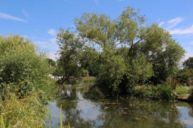 River Mole, Cobham