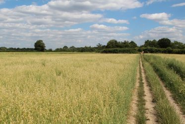 Footpath to Norwood Green, from Osterley Park