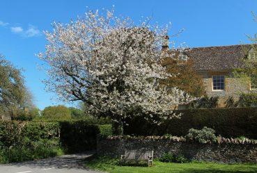 May blossom, Adlestrop