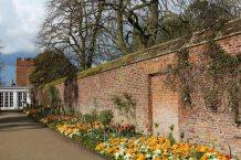 Spring flowers, Tiltyard walls, Hampton Court Palace