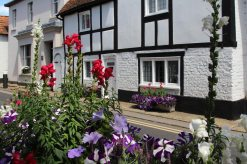 Flower display, High Street, Bray