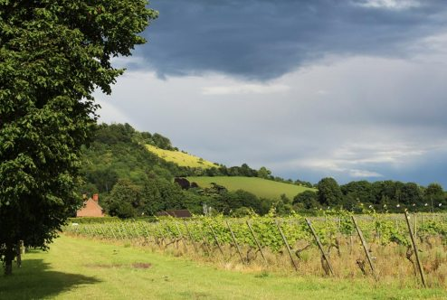 Box Hill, from Denbies Vineyard, Dorking