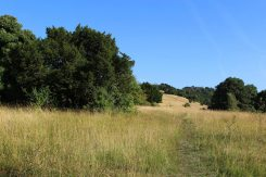 Burford Spur, foot of Box Hill