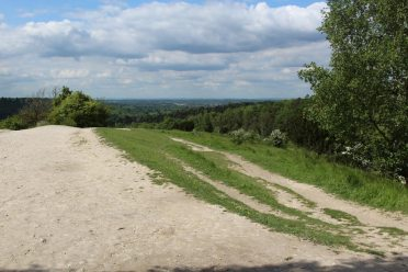 Chalk path, Burford Spur, Box Hill