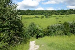 Lodge Hill, from path to Burford Spur, Box Hill