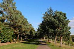Fir Walk, Painshill Park, Cobham