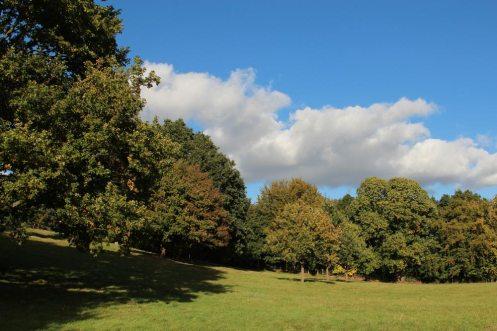 Painshill Park, Cobham