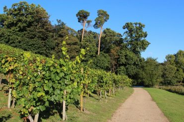 Path beside the Vineyard, Painshill Park, Cobham