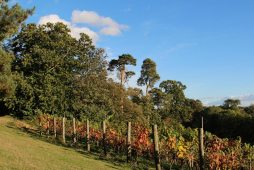 The Vineyard, from the Bastion, Painshill Park, Cobham