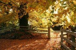 Autumn, Rockbourne