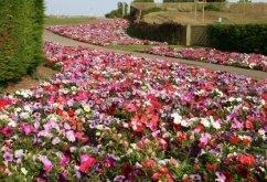 Flower display, Skegness