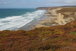 Heather and gorse, from cliffs above Porthtowan