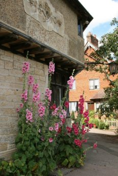 Hollyhocks, Leicester Square, Penshurst