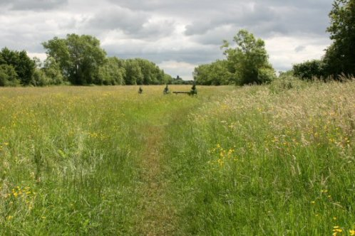 North Meadow, Cricklade