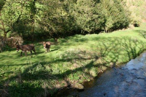 Oare Water, Oare, Exmoor (Lorna Doone Country)