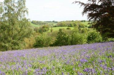 Surrey Hills, from bluebell wood, Winkworth Arboretum