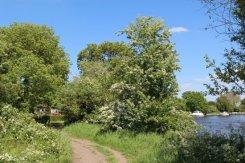 Thames Path, River Thames, Chertsey
