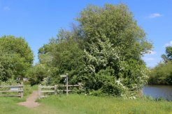 Thames Path to Shepperton, from Dumsey Meadow, Chertsey