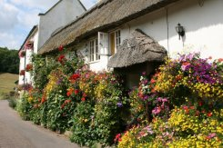 Thatched cottage, Church Row, Branscombe