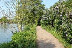 Towpath, River Thames, Walton-on-Thames