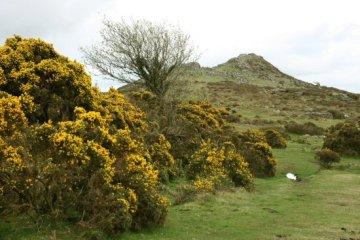 Sharp Tor, Dartmoor