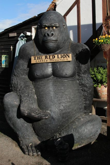 The Red Lion Gorilla, The Red Lion, Little Missenden
