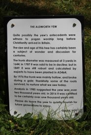 The Aldworth Yew information board, St. Mary's Churchyard, Aldworth