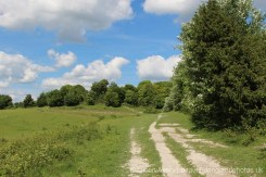 Cadsden to Chequers, along The Ridgeway