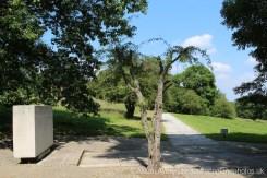 Hawthorn, beside John F. Kennedy Memorial, Runnymede