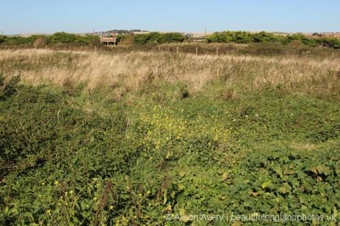 Looking towards Bishopstone Beach Halt Station, Tide Mills, near Newhaven