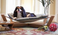 21 Creative Dog Beds Ideas To Get Inspired